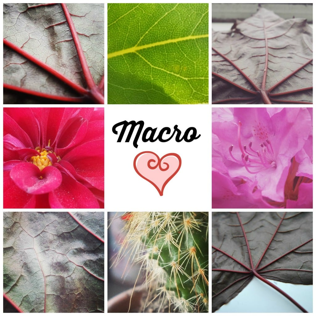 macro love