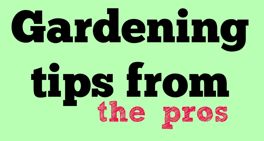 5 DIY Gardening tips from the Pros
