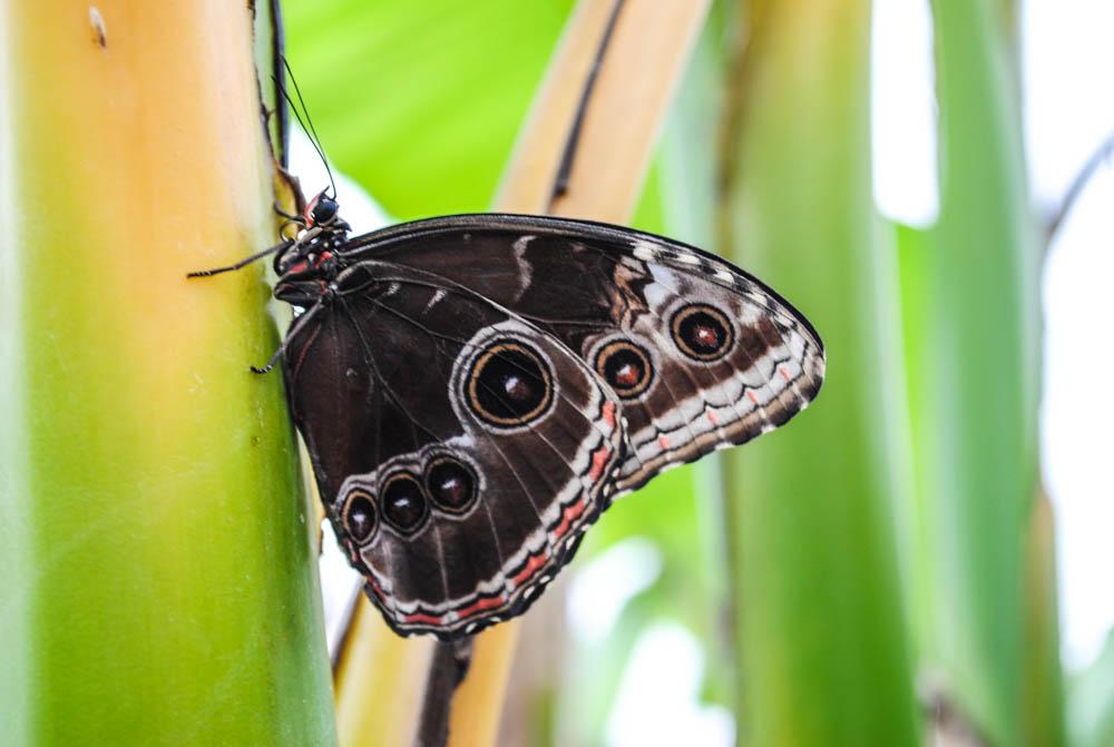 Sensational Butterfly Exhibit