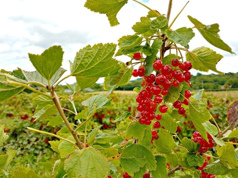 Click through to see more photos on our Foraging for fruit adventure with Fruit Shoot.