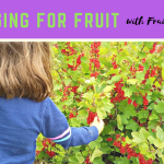 Click through see more of our fruit picking adventures with Fruit Shoot UK