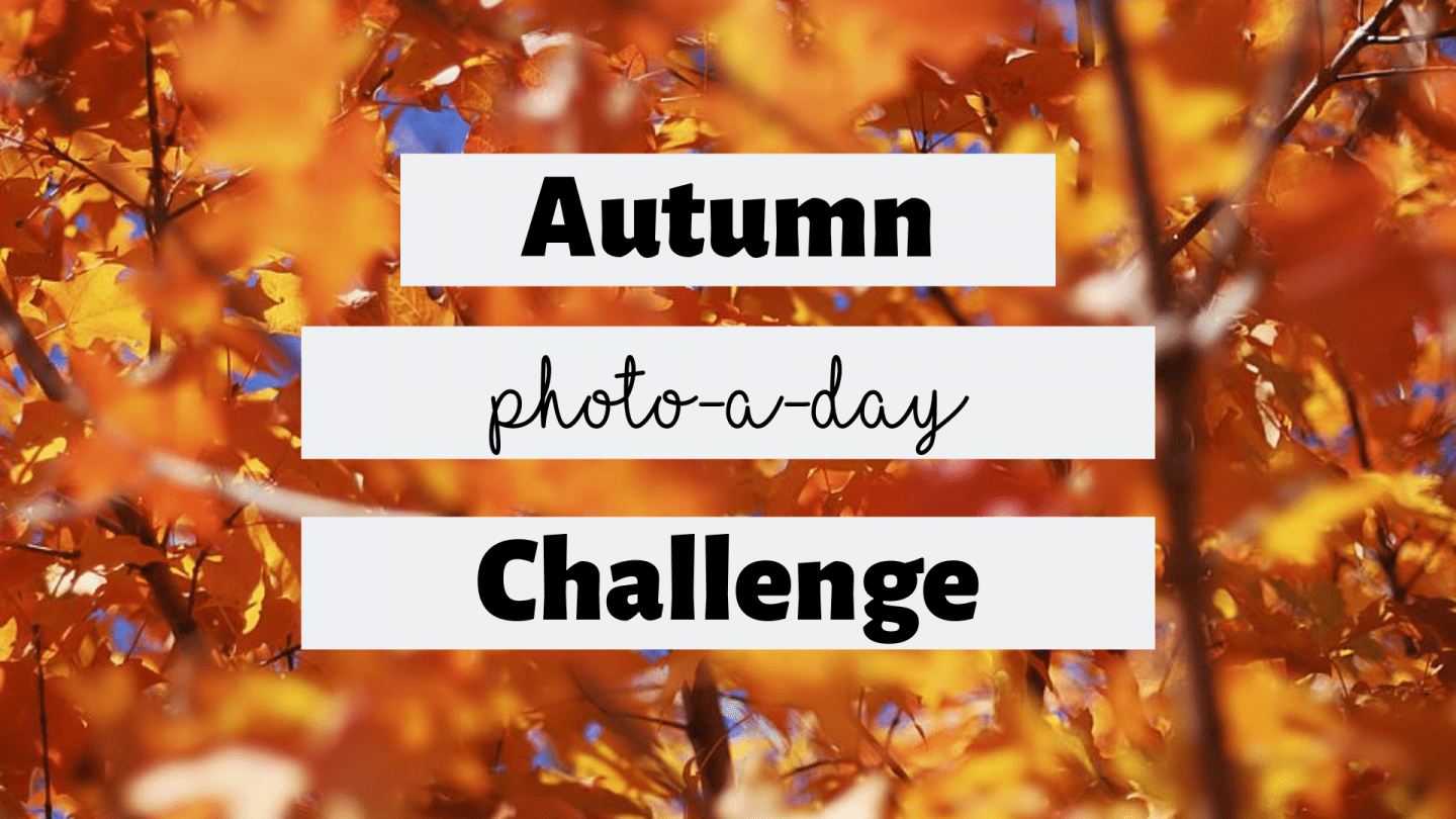 Autumn Photo-a-day Challenge