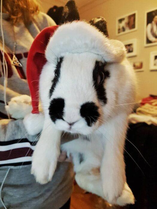 Rabbit wearing a Christmas hat