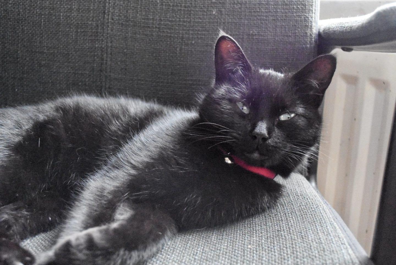 We were adopted by a cat | Meet Sega